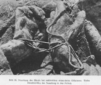Katyn Massacre Photo